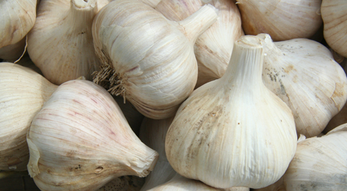 Sorry Dracula Garlic Linked To Hair Restoration